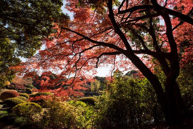 新宿御苑【上の池付近の紅葉】2