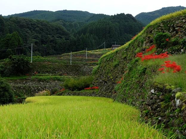 日本一の高石積み1