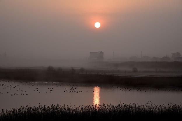 朝靄と鴨達
