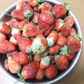 家庭菜園の四季なり苺