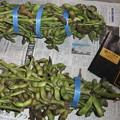 写真: 丹波の黒豆