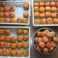 甘柿 100個