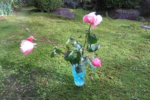 薔薇の切花 2