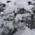 1月12日大雪警報が出た