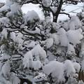 1月12日大雪警報が出た 2