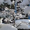1月14日の雪の様子