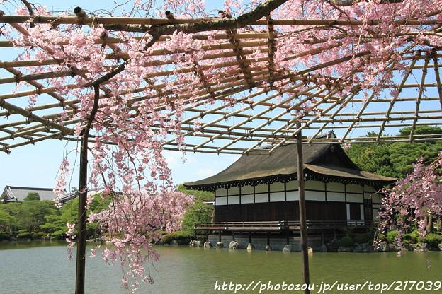 IMG_3274平安神宮・東神苑・八重紅枝垂桜と尚美館(貴賓館)