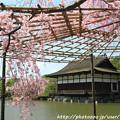 Photos: IMG_3274平安神宮・東神苑・八重紅枝垂桜と尚美館(貴賓館)