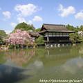 IMG_3300平安神宮・東神苑
