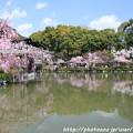 Photos: IMG_3309平安神宮・東神苑