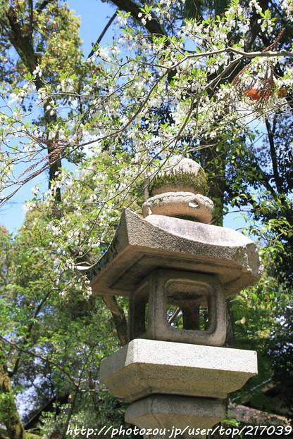 IMG_3795松尾大社・灯台躑躅と灯籠
