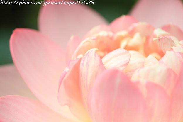 IMG_5889蓮