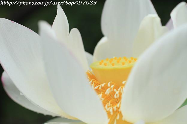 IMG_6022蓮