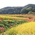 Photos: IMG_6877葛城古道