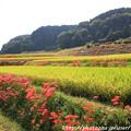 Photos: IMG_6882葛城古道