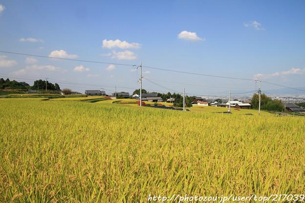 IMG_6894葛城古道