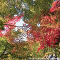 写真: IMG_7247永源寺・いろは紅葉