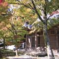 写真: IMG_7257永源寺・いろは紅葉と開山堂