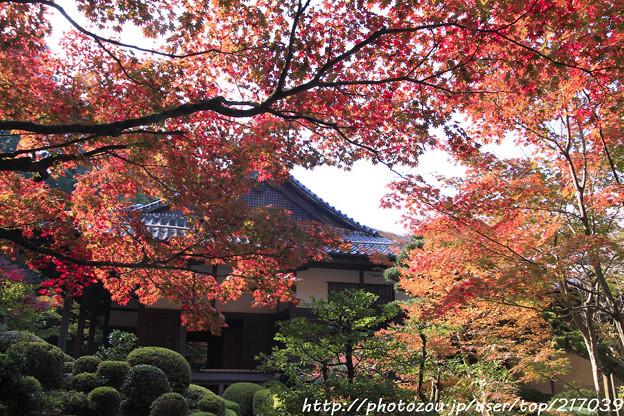 IMG_7385金剛輪寺(松尾寺)・明壽院庭園・いろは紅葉と明寿院