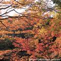 写真: IMG_7613西明寺・いろは紅葉