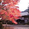 写真: IMG_7625西明寺・いろは紅葉と庫裏