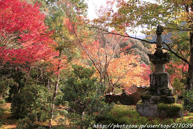 IMG_7632西明寺・いろは紅葉と灯籠