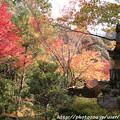 写真: IMG_7632西明寺・いろは紅葉と灯籠