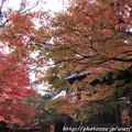 写真: IMG_7643西明寺・いろは紅葉