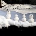 写真: 四個小雪人