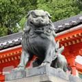 写真: 狛犬 IMG_0638