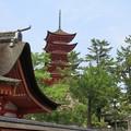 写真: 厳島神社 IMG_0991