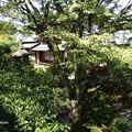 写真: 大雲院祇園閣 P9241261