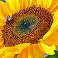 蜜と花粉を集めて