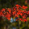 写真: 秋深む
