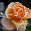写真: 5justj29101211 (1) (1280x960)