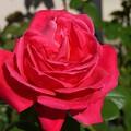 写真: 11madami29111601 (1) (1280x960)