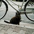猫撮り散歩1729