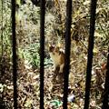 猫撮り散歩1757