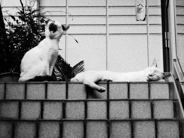 猫撮り散歩1770