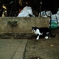 猫撮り散歩1808