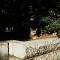 猫撮り散歩1812
