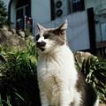 写真: 猫撮り散歩1930
