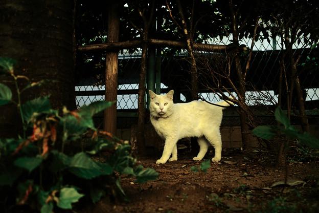 猫撮り散歩1945
