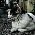 写真: 猫撮り散歩1947