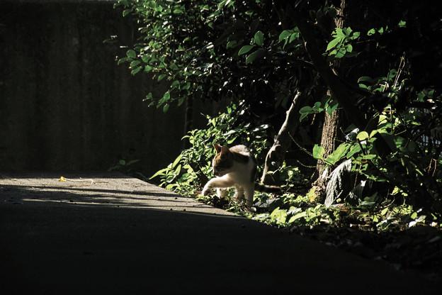写真: 猫撮り散歩1950