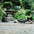 写真: 猫撮り散歩1980