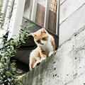 写真: 猫撮り散歩1981