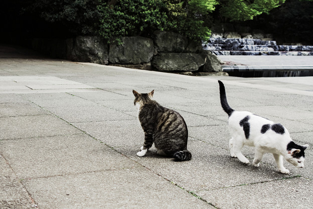 猫撮り散歩1985