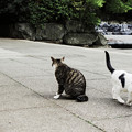 写真: 猫撮り散歩1985