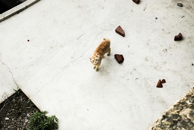 写真: 猫撮り散歩1990